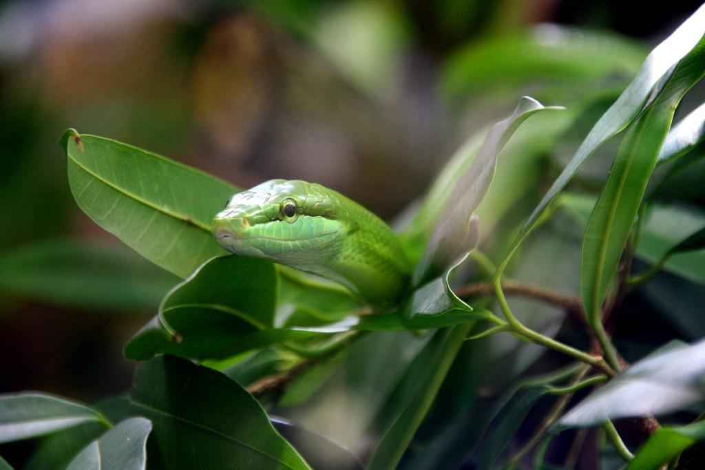 Hidden Green Snack
